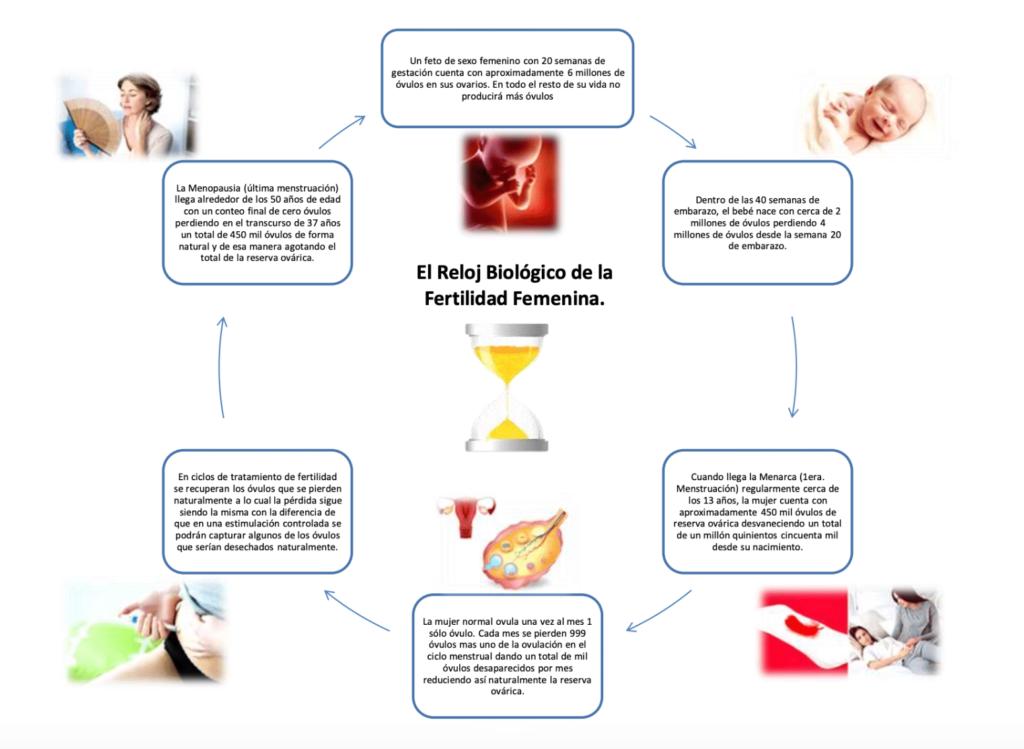 Reloj Biológico de la Fertilidad Femenina